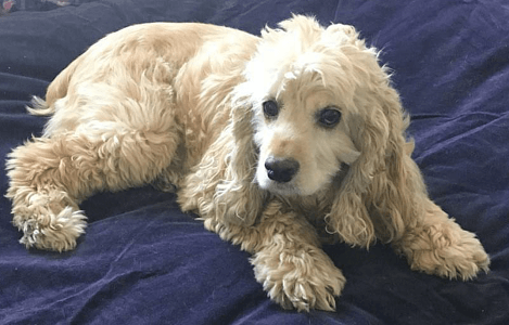 tosha-adopted-1