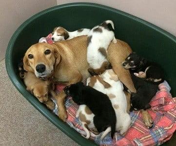 un-pups