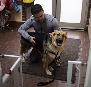 zoey-adoption-photo